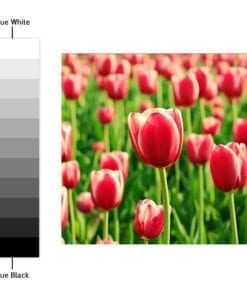 Color Nature Revestimento de Azulejos - Espectro de Cores