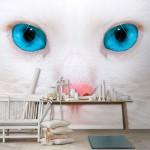 Gato com Olhos Azuis Mural - Destaque