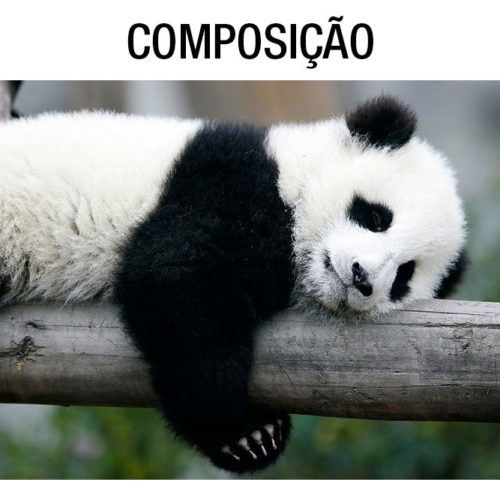Panda a Relaxar - Mural - Composição