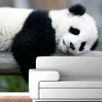 Panda a Relaxar - Mural - Destaque